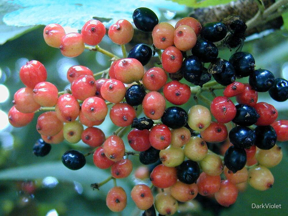Berries by DarkViolet