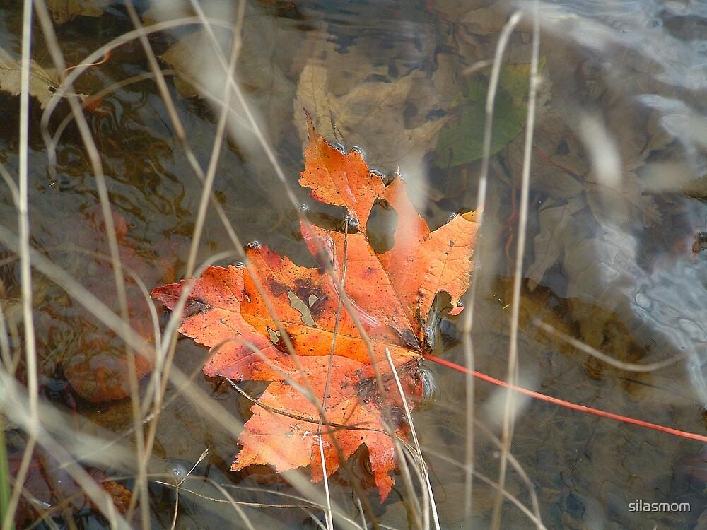Autumn Leaf by silasmom