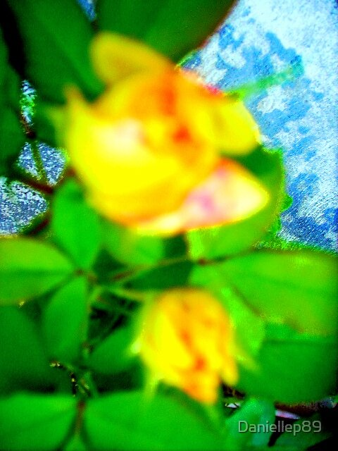 The rose in my garden by Daniellep89