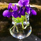 First Violets by Christine  Wilson