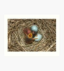 Baby Blue Birds 2 Art Print