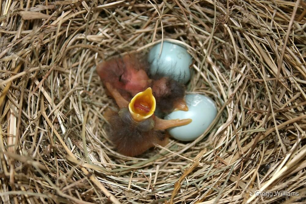 Baby Blue Birds 2 by Gregg Williams