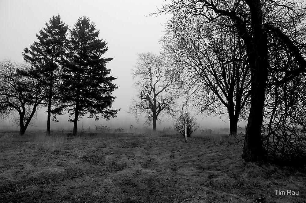 Foggy Field by Tim Ray