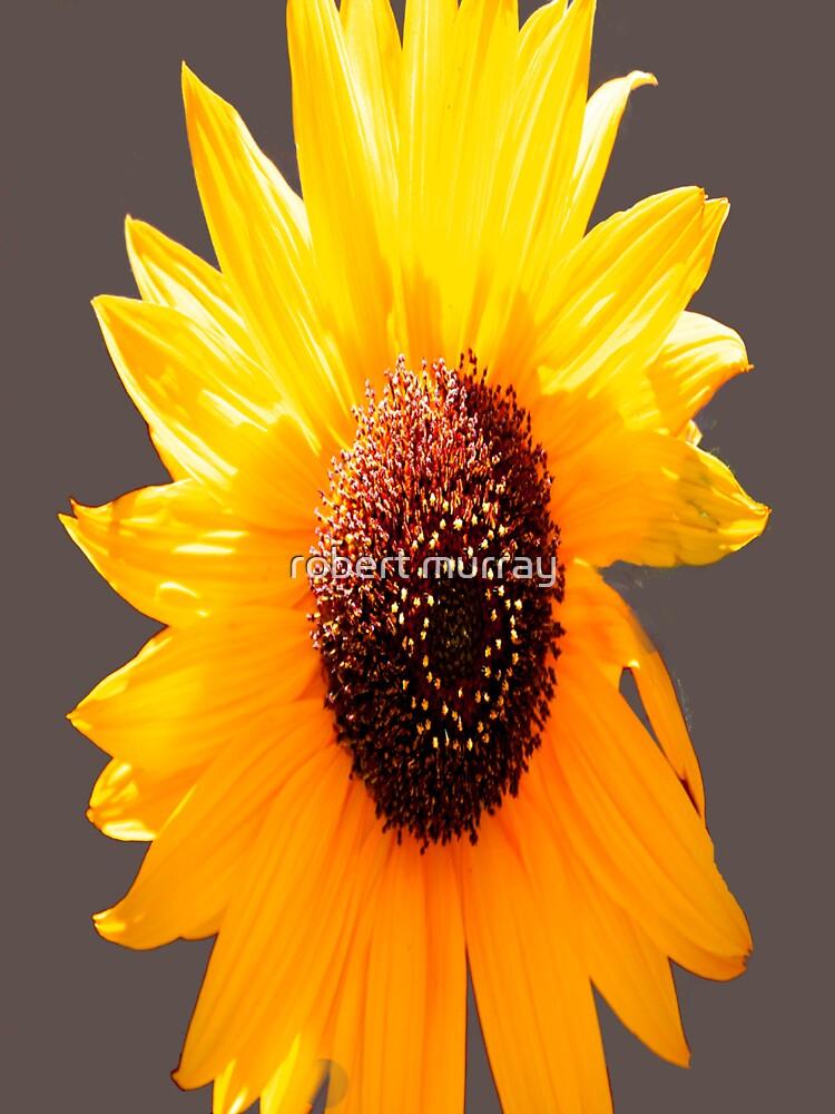 sunflower by treborbob