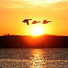 Malard Duck Sunset by Paul Lenharr II