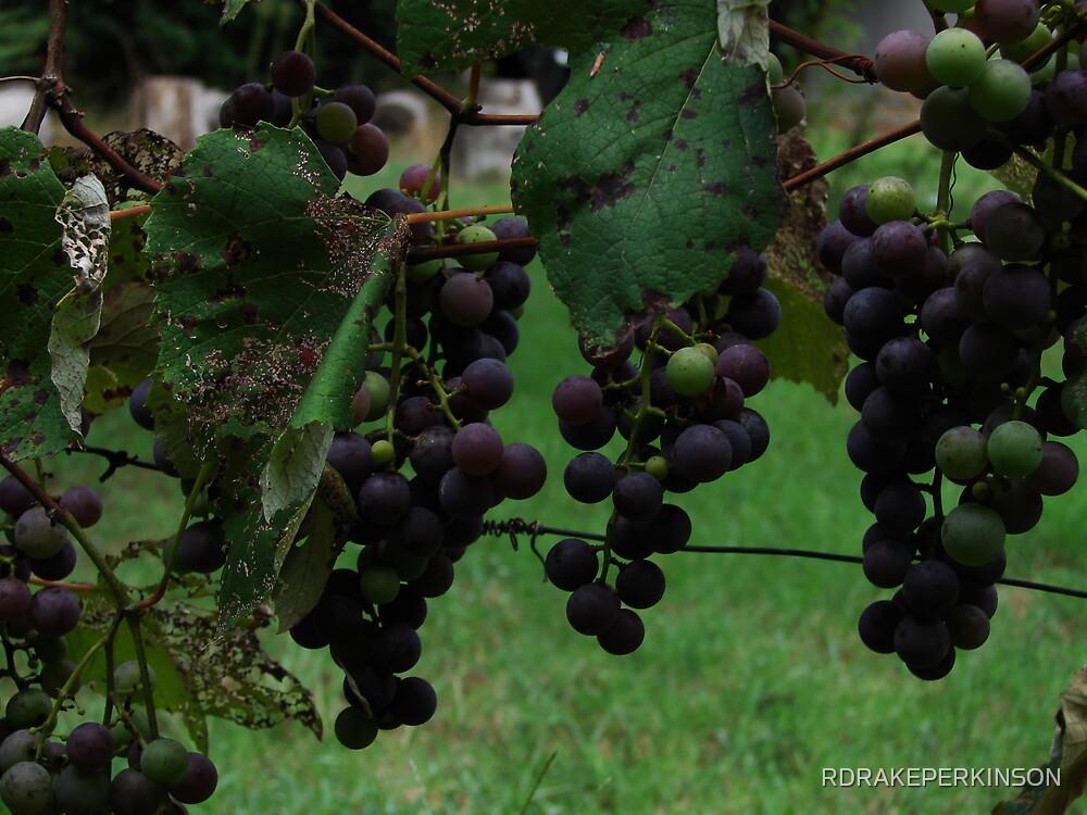 FRUITS OF SUMMER by RDRAKEPERKINSON