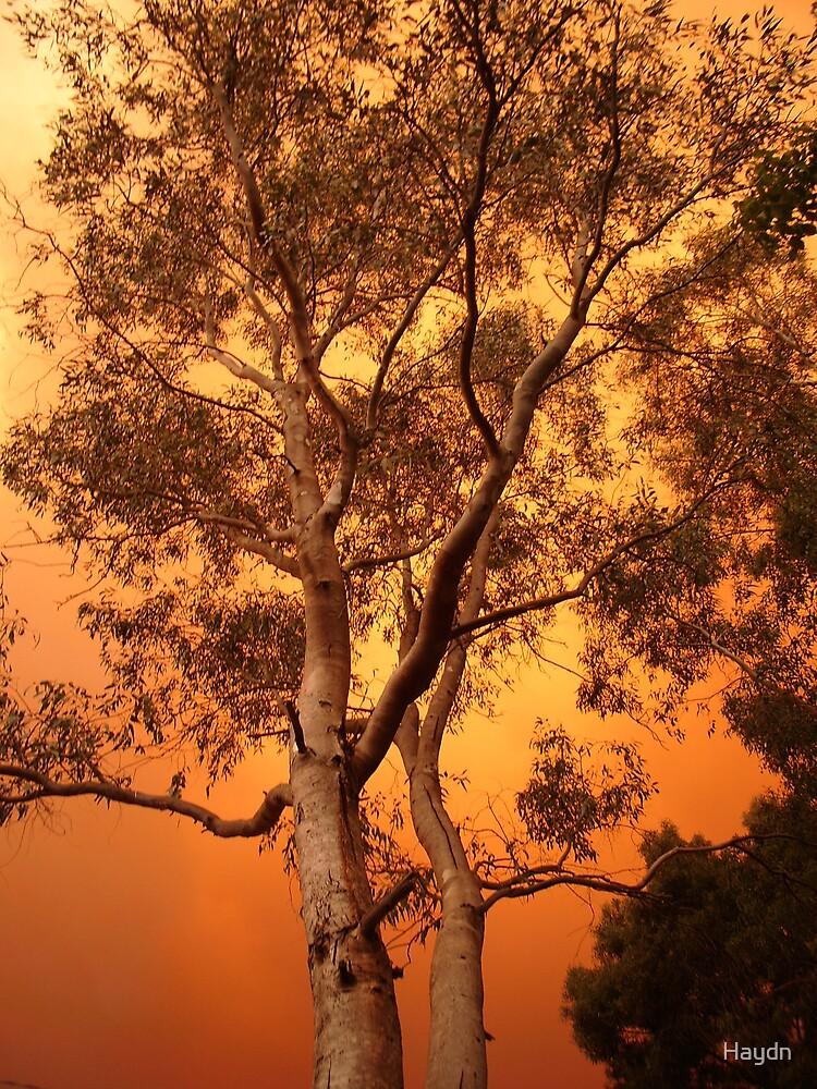 Lone Tree by Haydn