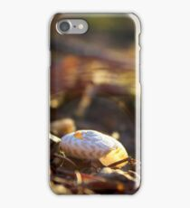 Fall Evening Sun on a Snail Shell  iPhone Case/Skin