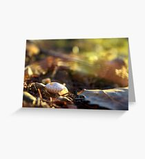 Fall Evening Sun on a Snail Shell  Greeting Card