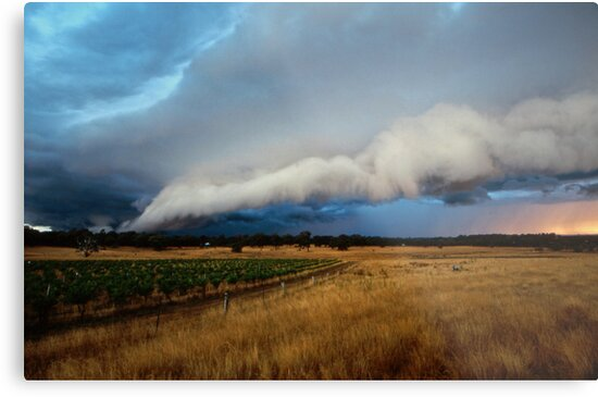 gustfront on the grapevine - central ranges, Vic by Tony Middleton