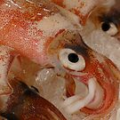 Squid by Stephen Colquitt