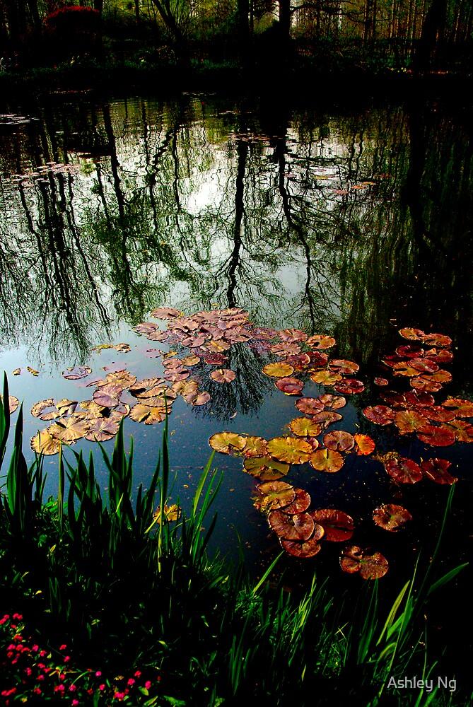 Waterlillies by Ashley Ng