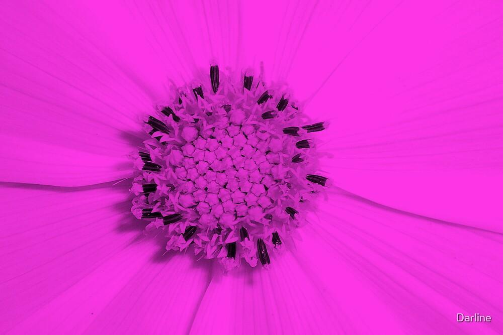 Pink Petals by Darline