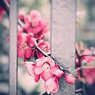 A delicate Spring by Silvia Ganora