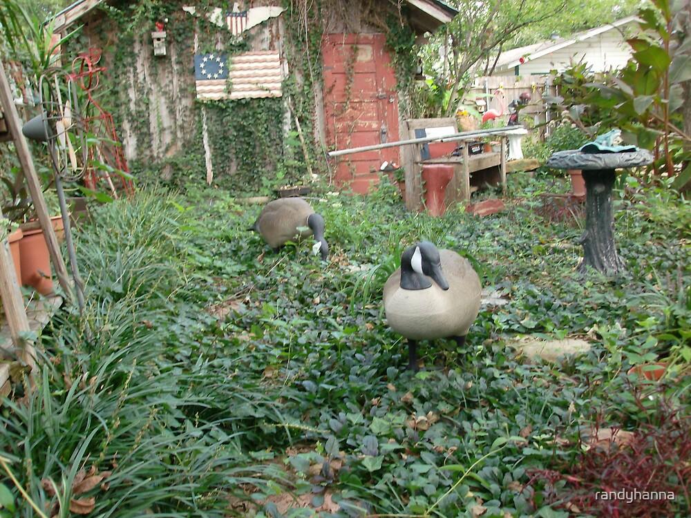Geese by randyhanna