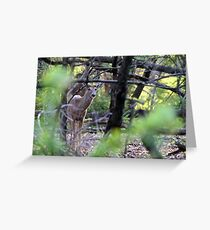 Velvet White-tailed Buck Greeting Card