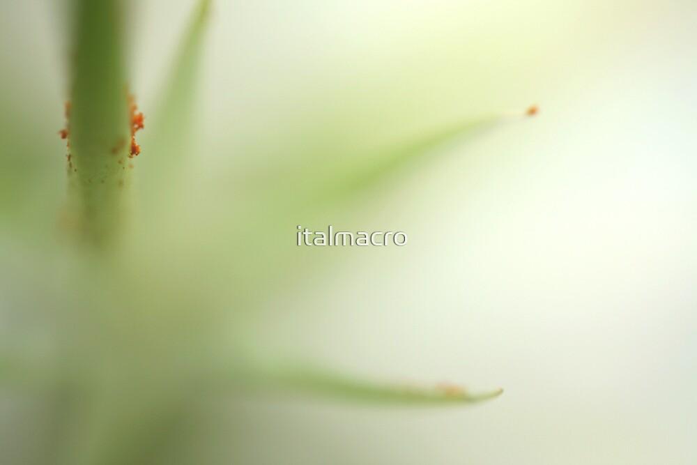 lilymist by italmacro