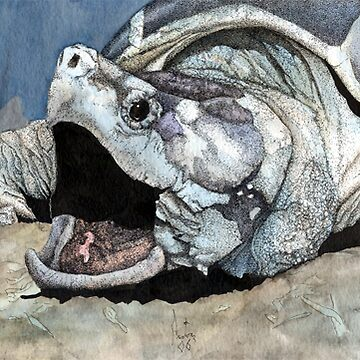 Alligator snapping turtle by Preston
