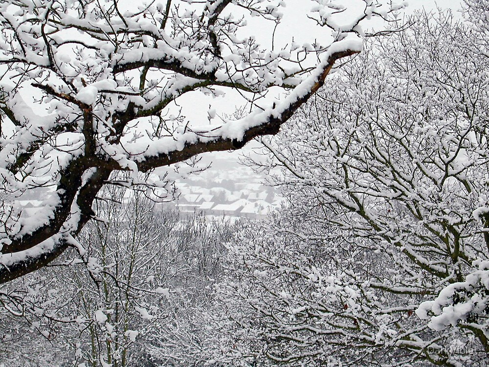 Snow scene by DarkViolet