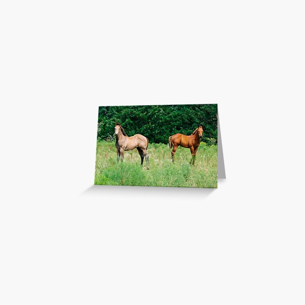 Pretty Horses call my Name Greeting Card