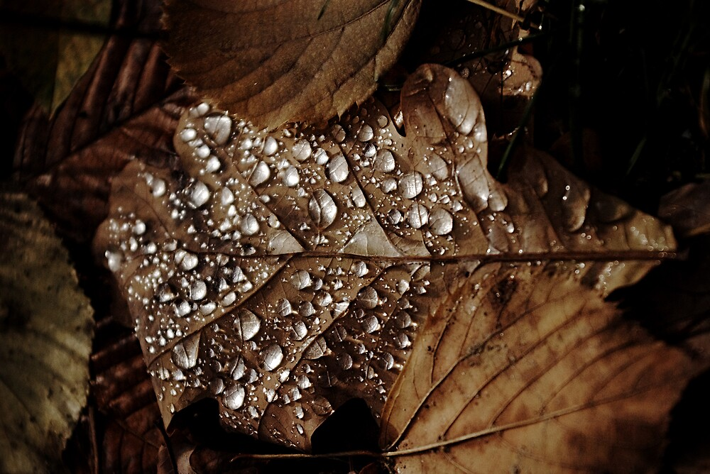 Drops by Ion Rosca
