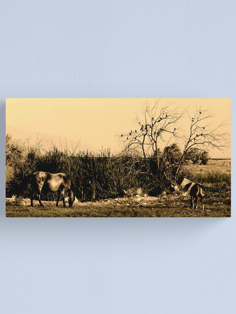 Alternate view of Equine Gothic Canvas Print