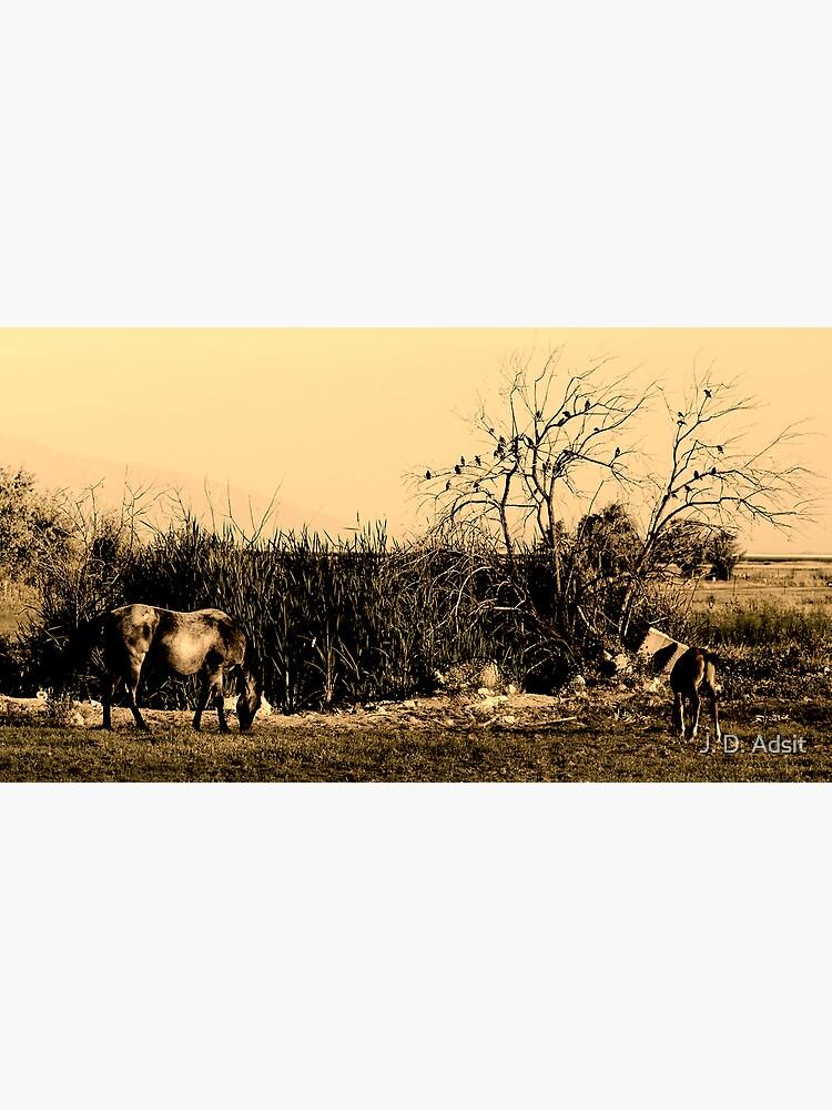 Equine Gothic by adsitprojectpro