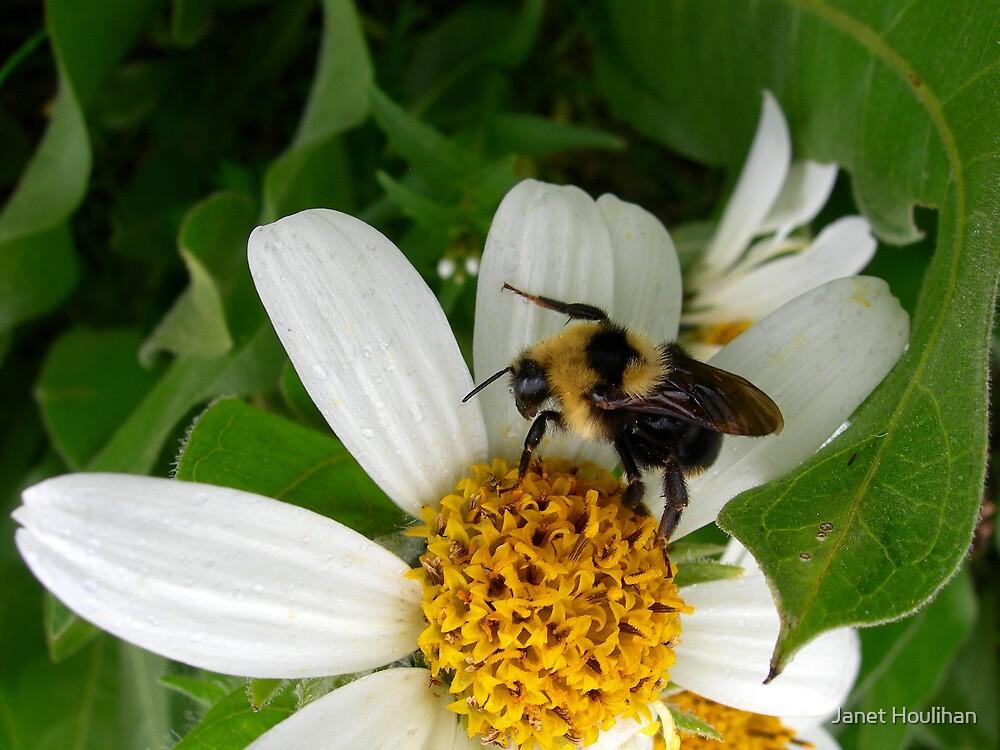 Bee on flower by Janet Houlihan