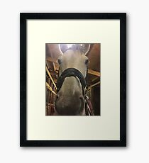 Can you neigh neigh? Framed Print