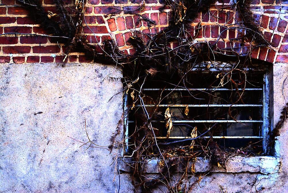 Window Vines by Rod  Adams