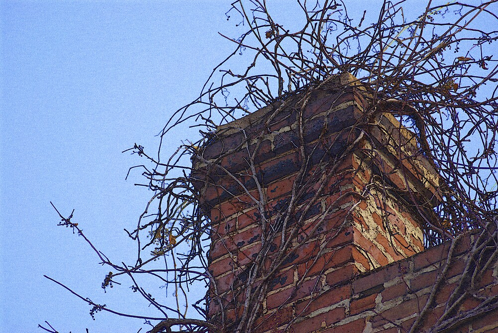 Chimney Vines by Rod  Adams