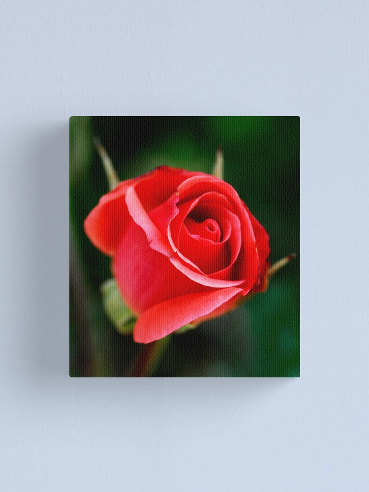 Alternate view of If I gave you this Rose Canvas Print