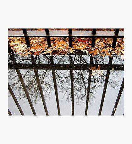 Puddles and Leaves Photographic Print