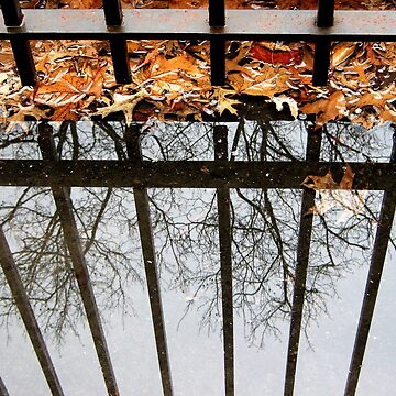 Puddles and Leaves by biriart