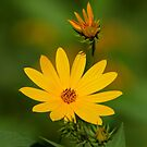Petals of Sunshine by Todd Weeks
