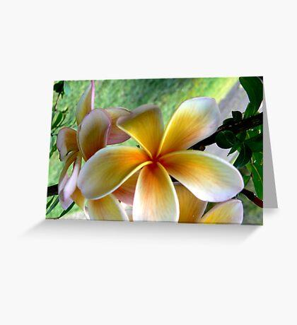 Frangipani #1  Greeting Card