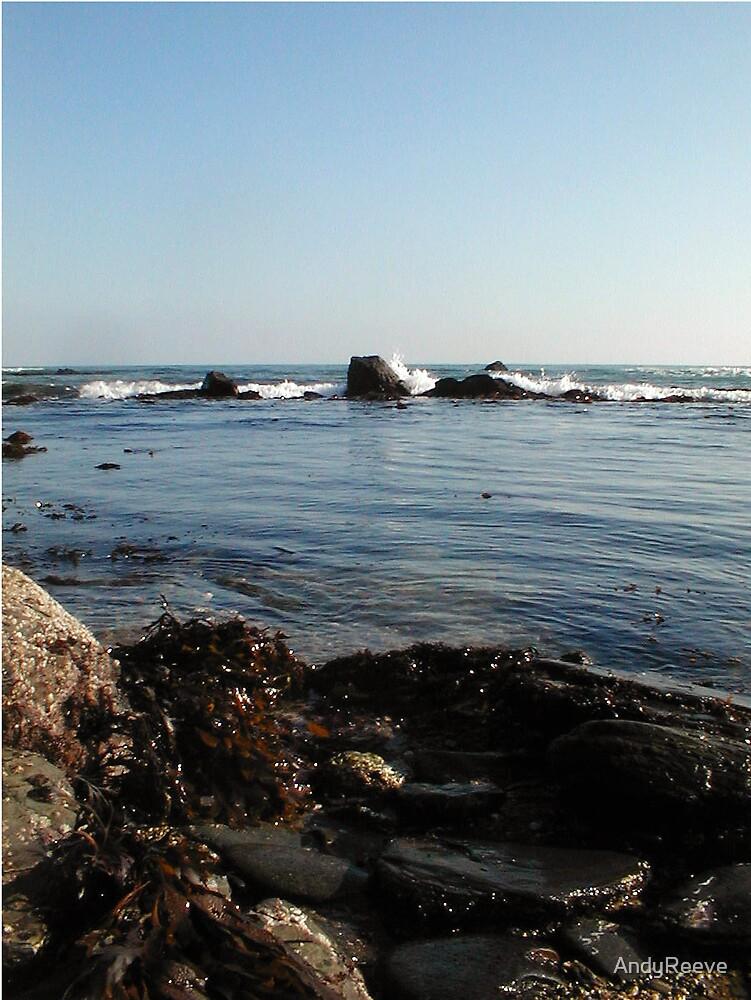 Seaweed&Rocks by AndyReeve