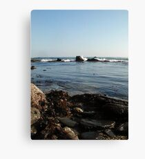 Seaweed&Rocks Canvas Print