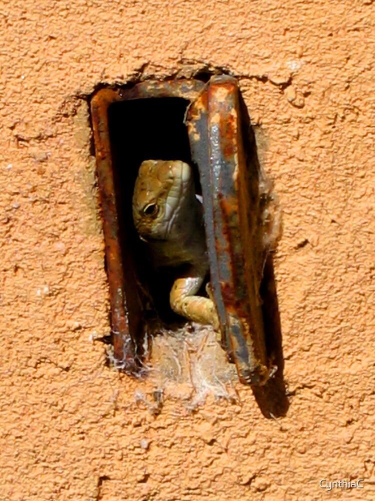 Tuscan lizard by CynthiaC