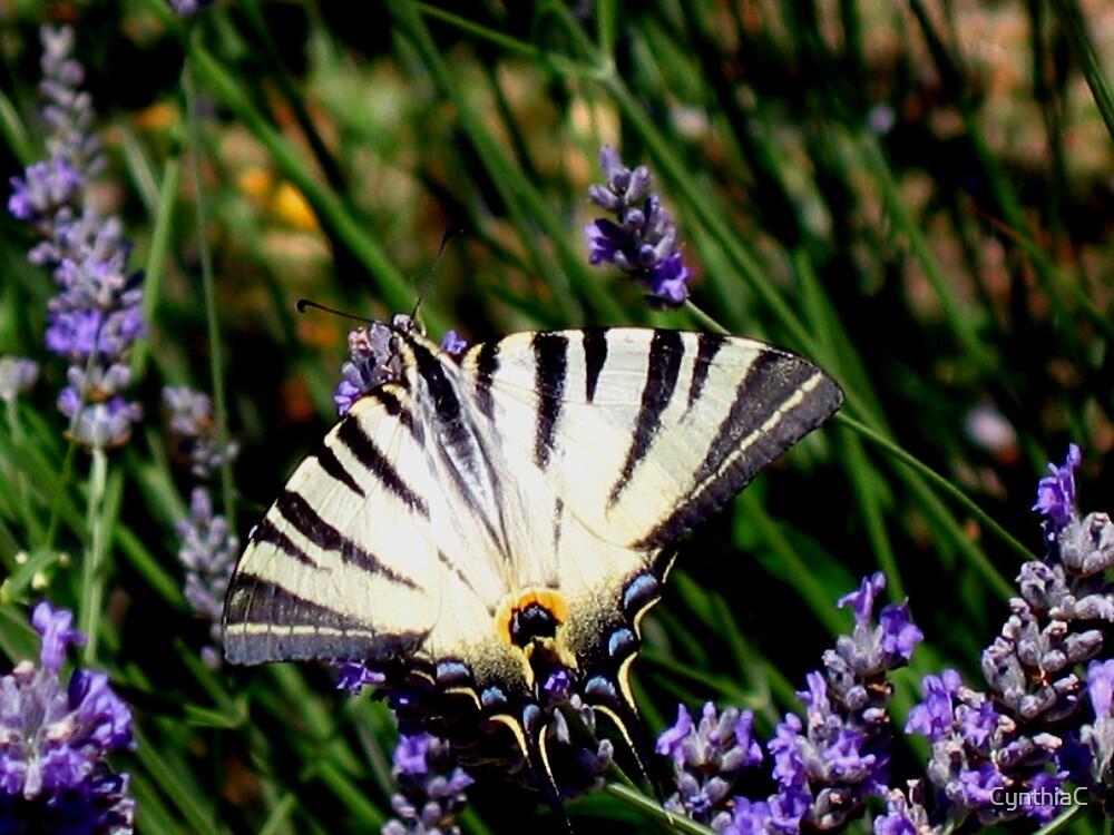 Butterfly delight by CynthiaC