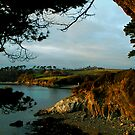 Helford River - Durgan4 by AndyReeve
