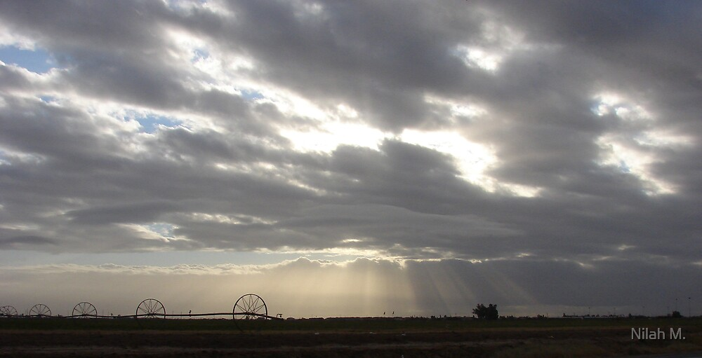 Desert Sun Rays by Nilah M.