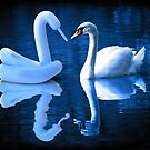 When Swans Meet by Randy Turnbow