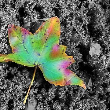 Tye-Dye Maple Leaf by melaniedion