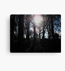 Afternoon Sun in the Woods Canvas Print