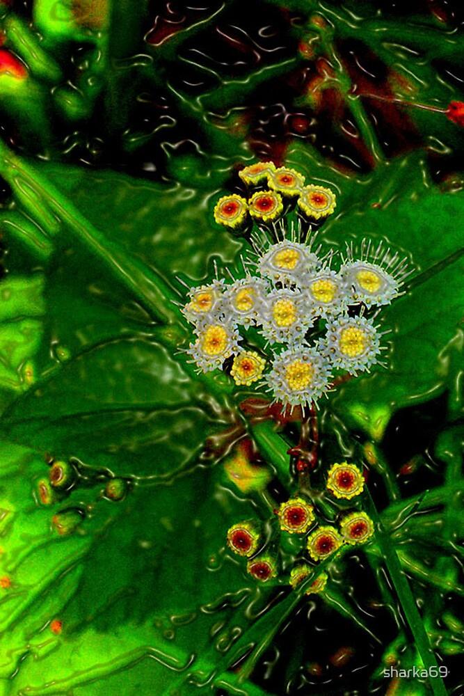 Watery Flowers by sharka69