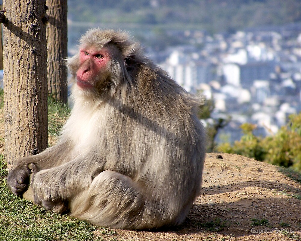Kyoto Wild Monkey by Caprice Sobels