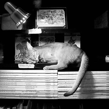 Catnap in Tokyo by Caprice