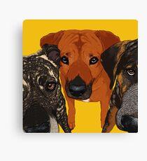 Three Amigos / dog friends rhodesian ridgeback hound pit bull brindle cute buddies pals bff Canvas Print