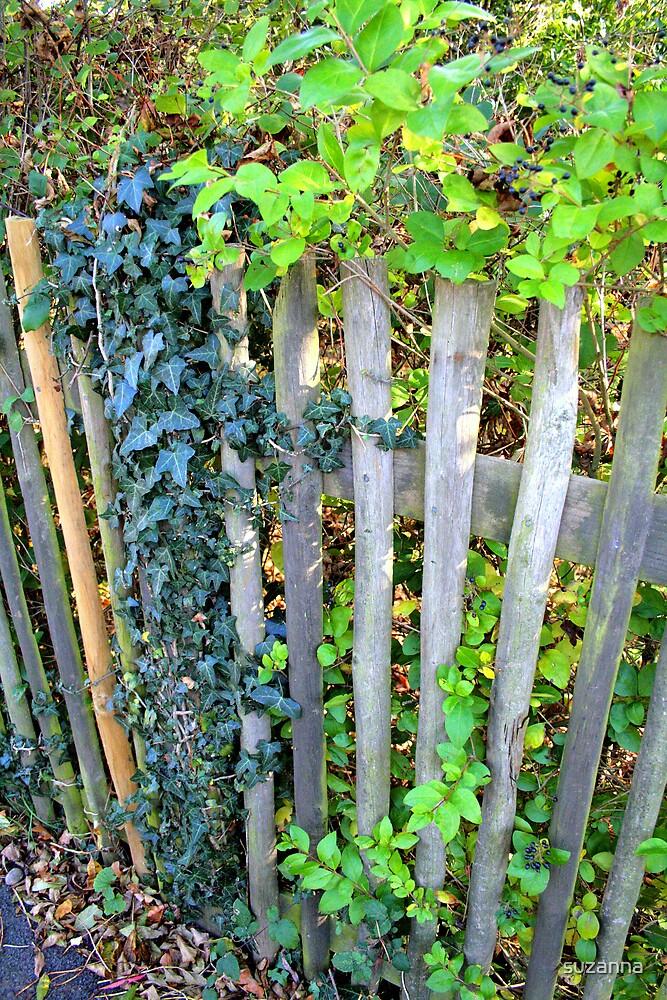 Garden Gate by suzanna